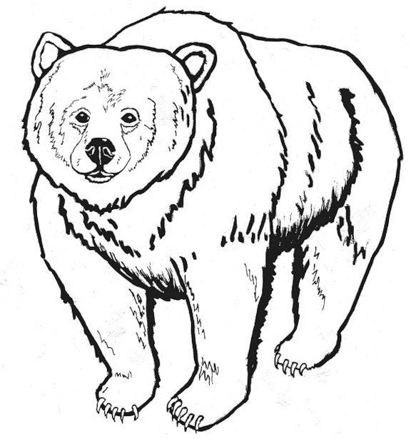 4 Images of Bear Coloring Pages Printable