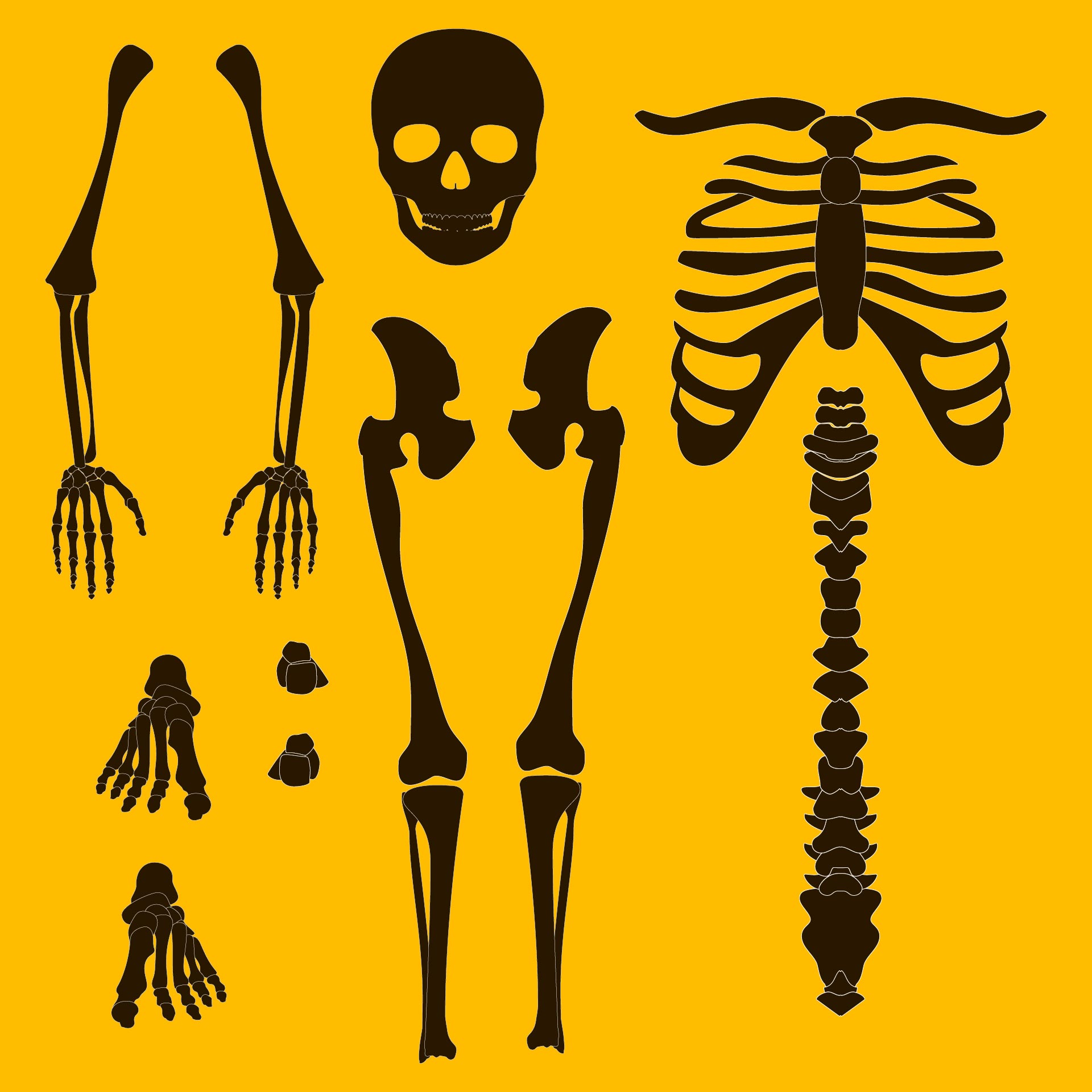 8 best images of halloween skeleton template printable for Skeleton template to cut out
