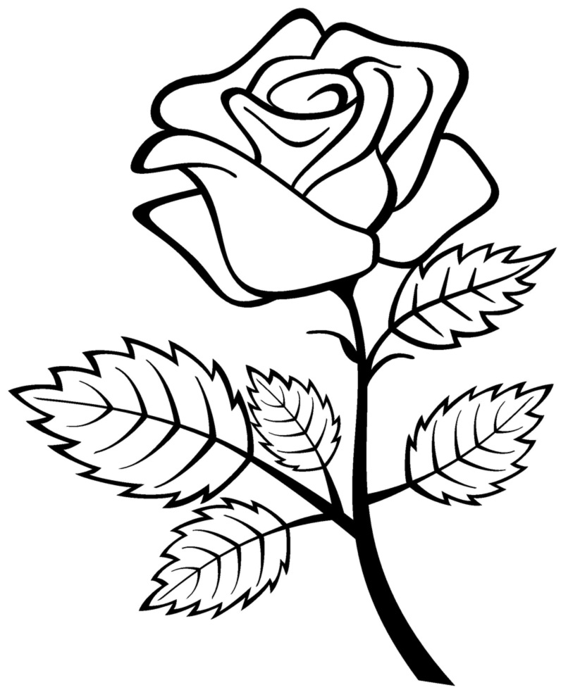 7 Images of Roses To Color Printable