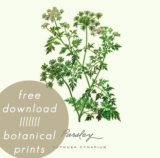5 Images of Free Printable Botanical Prints