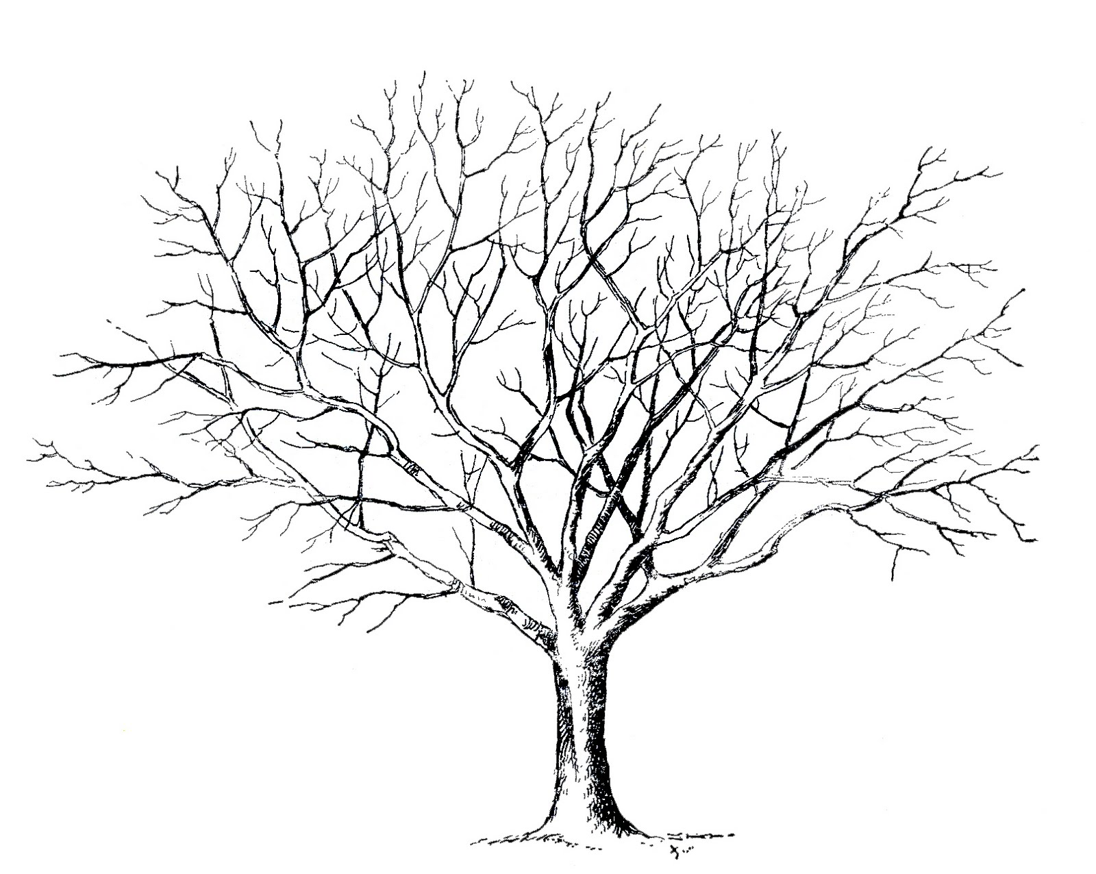 6 best images of printable tree drawings winter tree clip art fingerprint tree template and