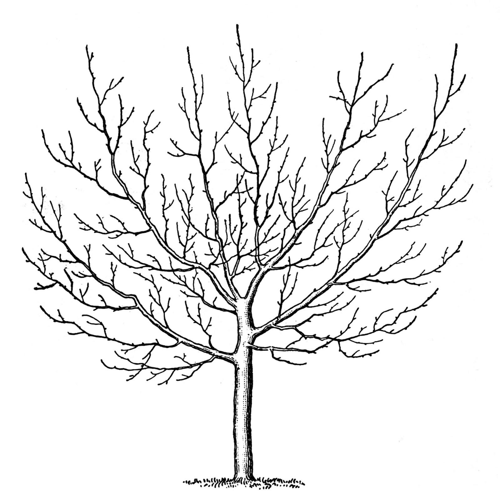 6 Images of Printable Tree Drawings