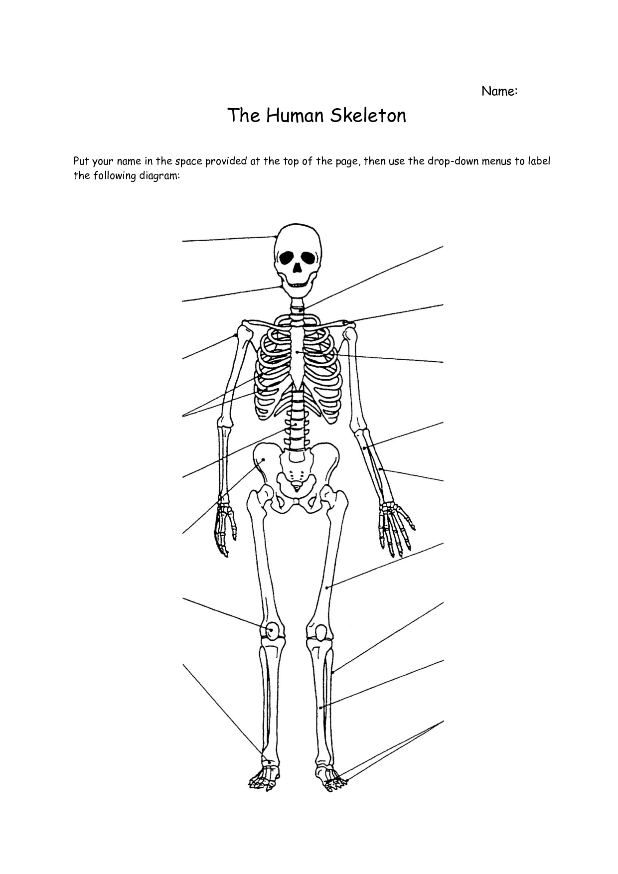 Blank Skeleton Worksheet - Khayav