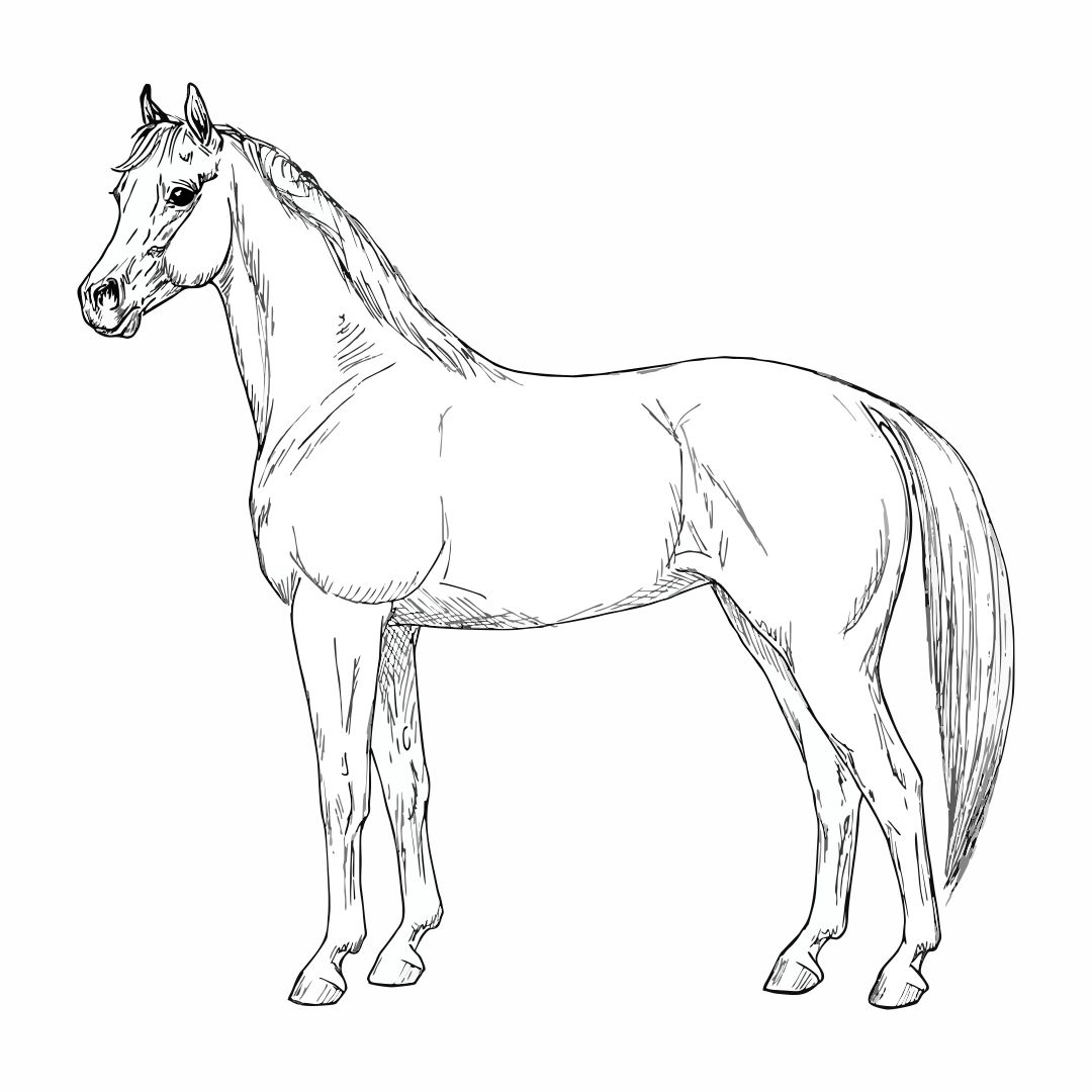 4 Best Images of Horses Paint By Number Printable - Horse ...