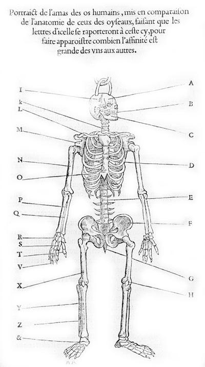 4 Best Images of Printable Bone Worksheets - Free Printable Human ...