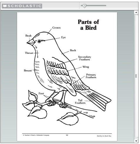 6 best images of preschool printables bird parts bird kindergarten printables bird parts. Black Bedroom Furniture Sets. Home Design Ideas