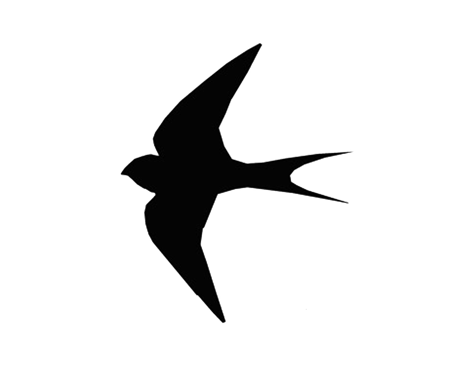 6 Images of Flying Bird Stencils Free Printable
