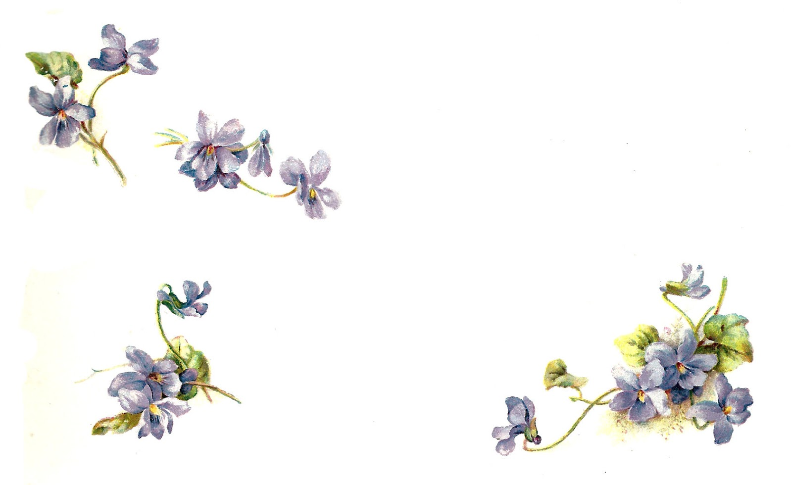 clip art forget me not flower - photo #13