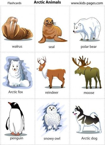 7 Images of Free Preschool Printables Arctic