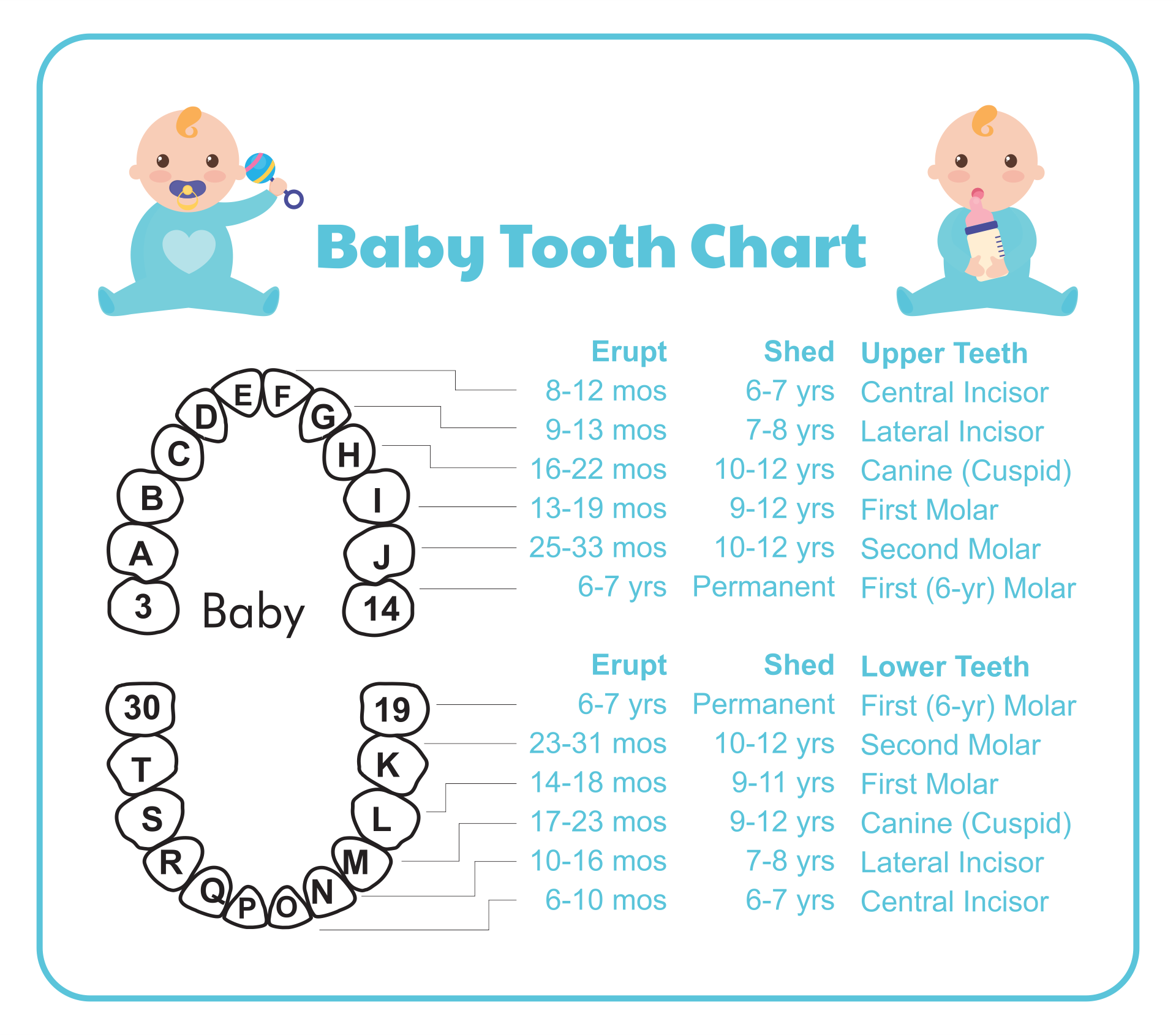 8 Best Images of Tooth Chart Printable Full Sheet - Dental ...