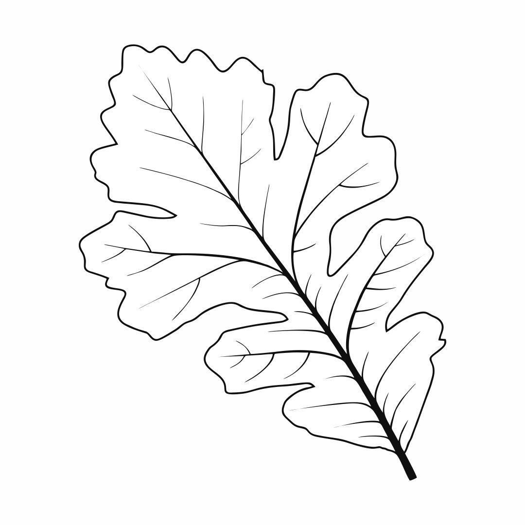 6 Images of Oak Leaf Stencil Printable