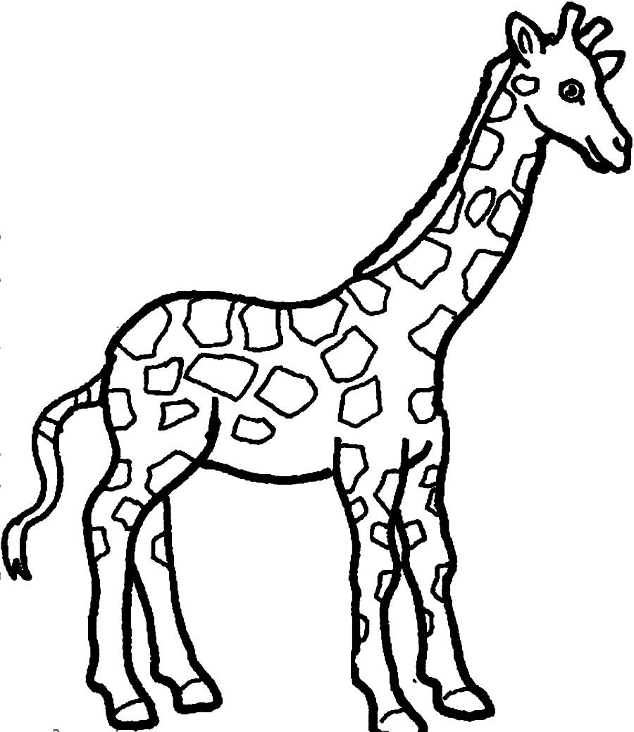 8 Images of Printable Coloring Pictures Of Giraffe