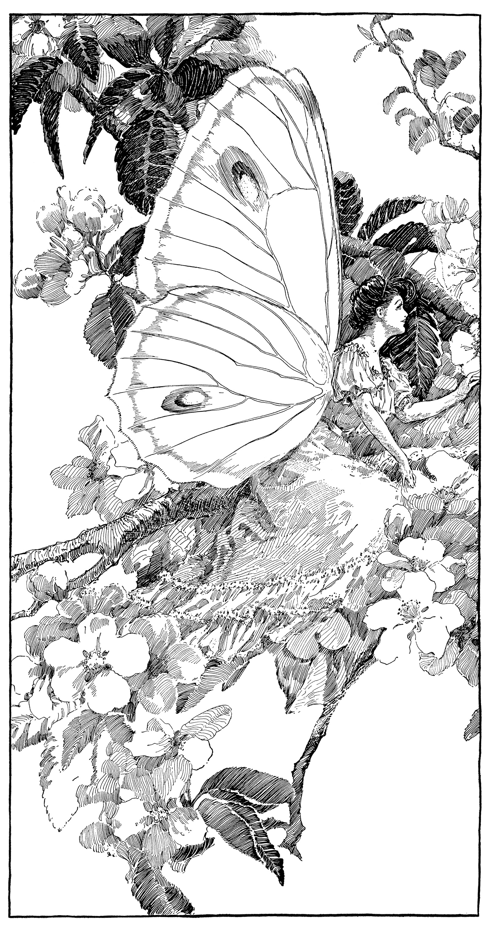 Butterfly Fairy Clip Art Black and White
