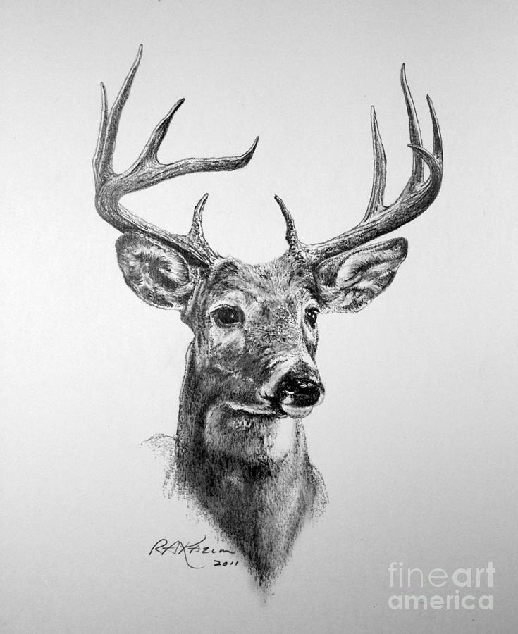 4 Images of Deer Sketches Printable