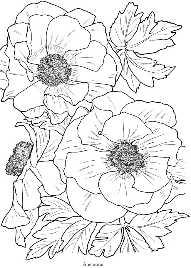 6 Images of Full Page Coloring Book Printables