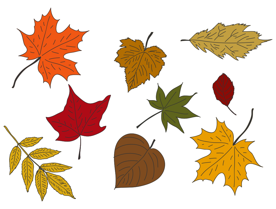 Fall Leaves Colored Printables