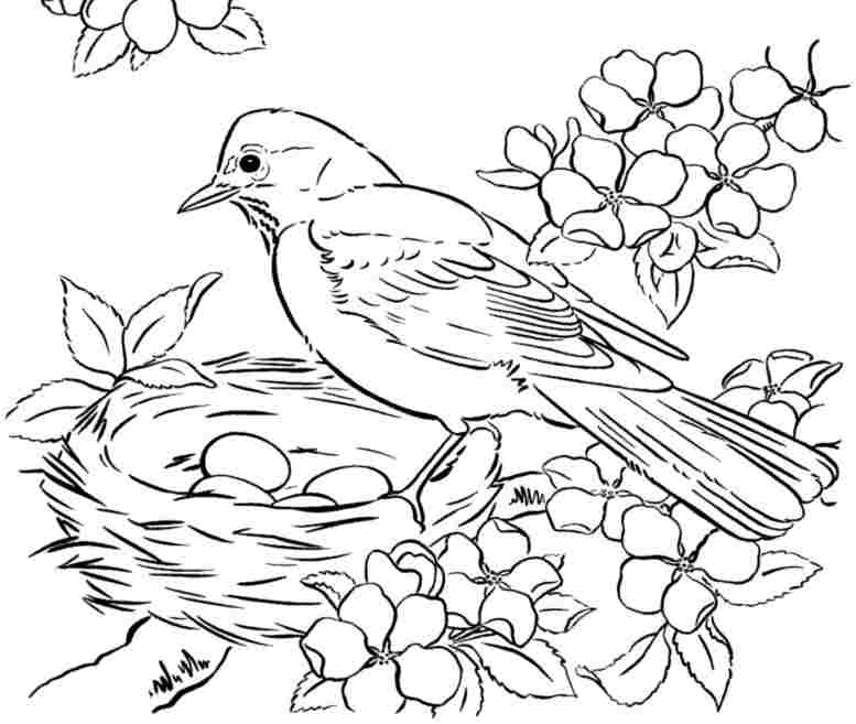 4 Images of Blue Birds Printable