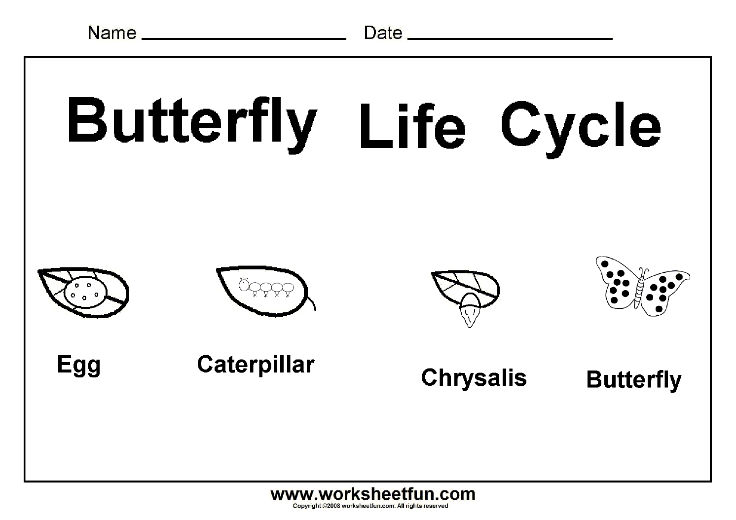 Butterfly Life Cycle Worksheet Images u0026 Pictures - Becuo