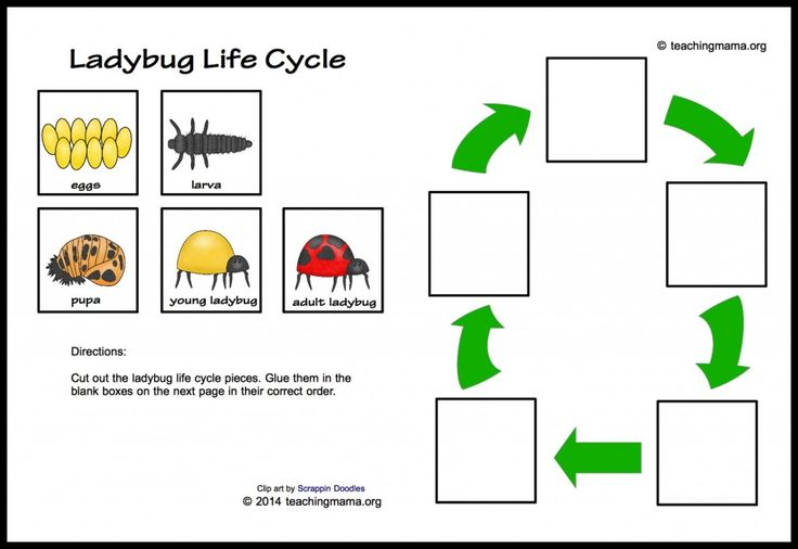 7 Images of Life Cycle Printable Worksheets