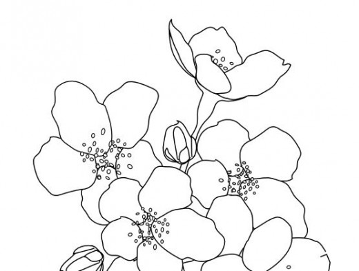cherry blossom tree coloring coloring pages