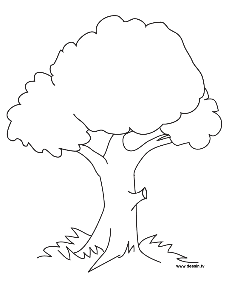 6 Images of Printable Tree Coloring Pages