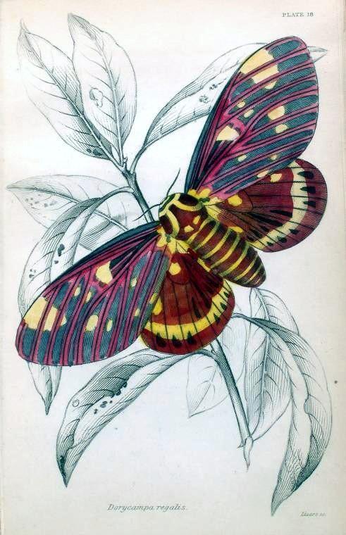 Free Printable Vintage Clip Art