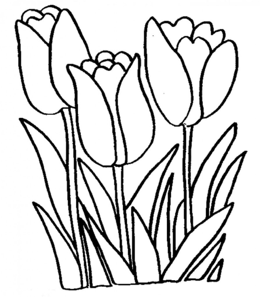 4 Images of Tulip Flower Printable Coloring Pages
