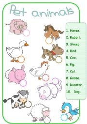 math worksheet : pet themed worksheets for kindergarten  1000 images about pet  : Pet And Wild Animals Worksheet For Kindergarten