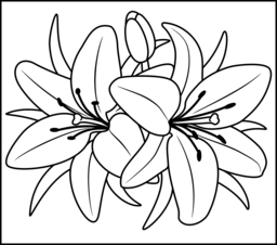 5 Images of Flower Coloring Pages Printable Lilies