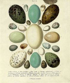 7 Images of Printable Botanical Prints Eggs