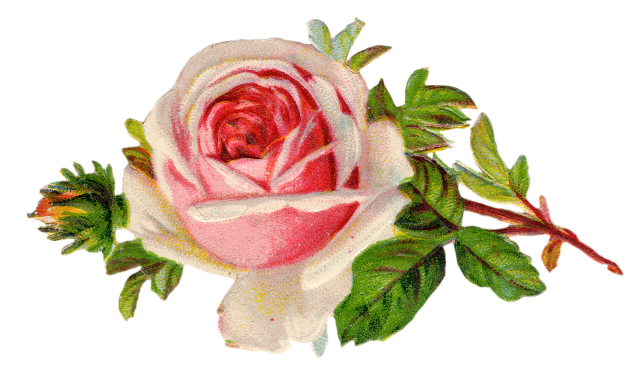 Vintage Rose Clip Art Free