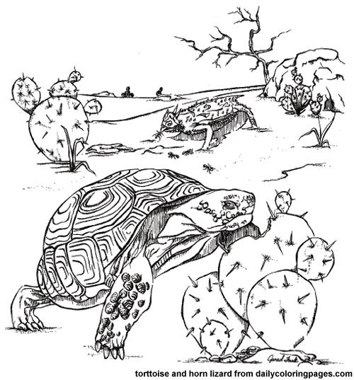 Desert Habitat Coloring Pages