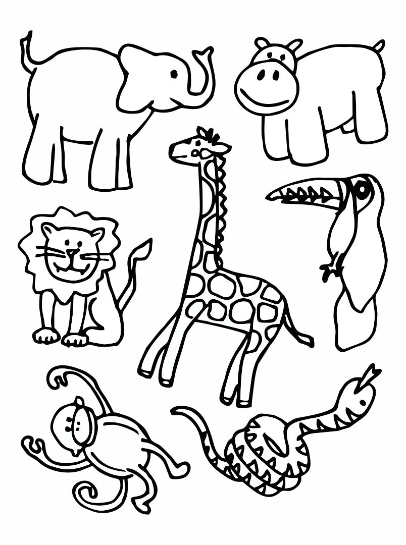 Dear Zoo Activity