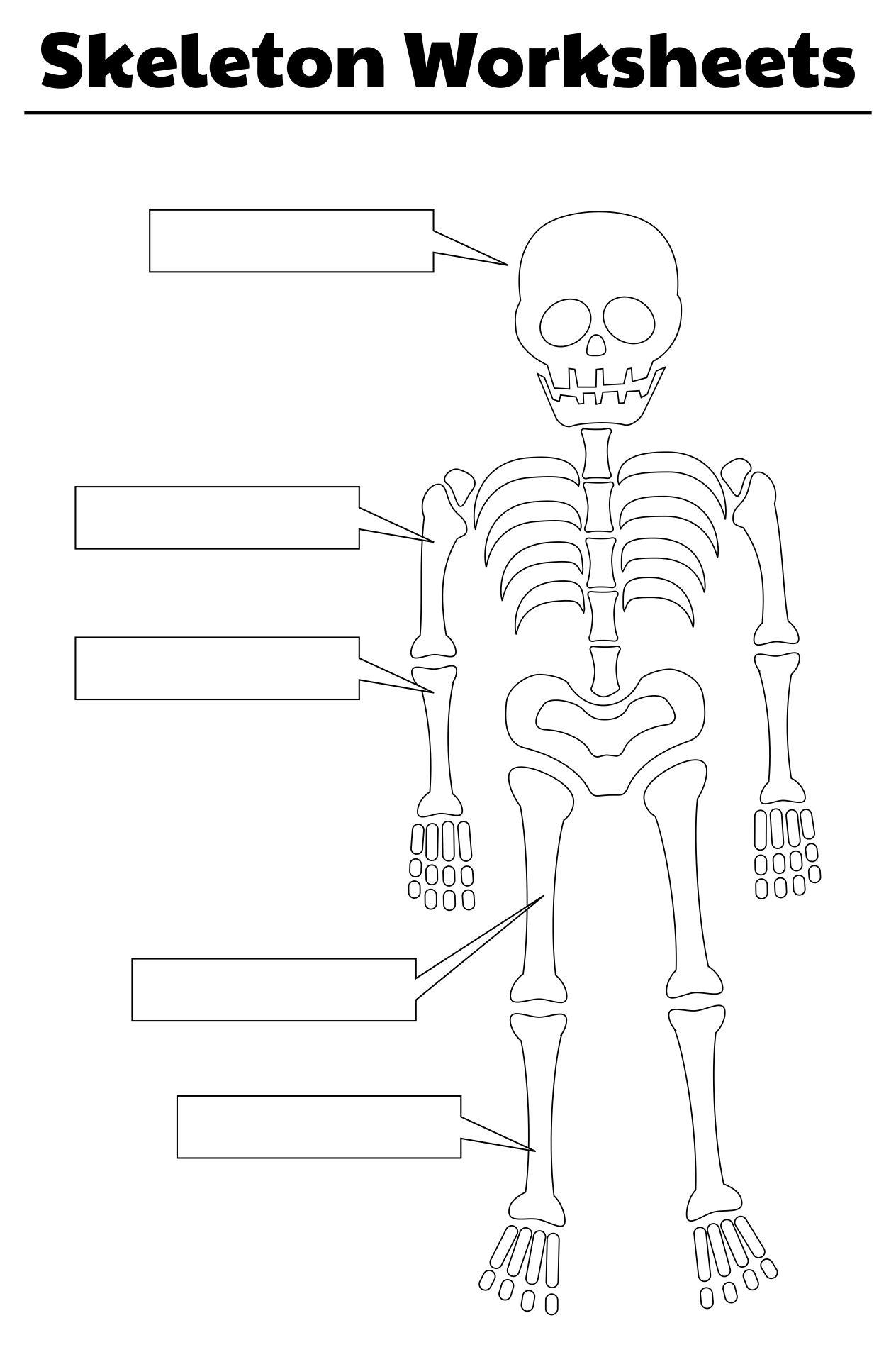 Printable Skeleton Worksheets