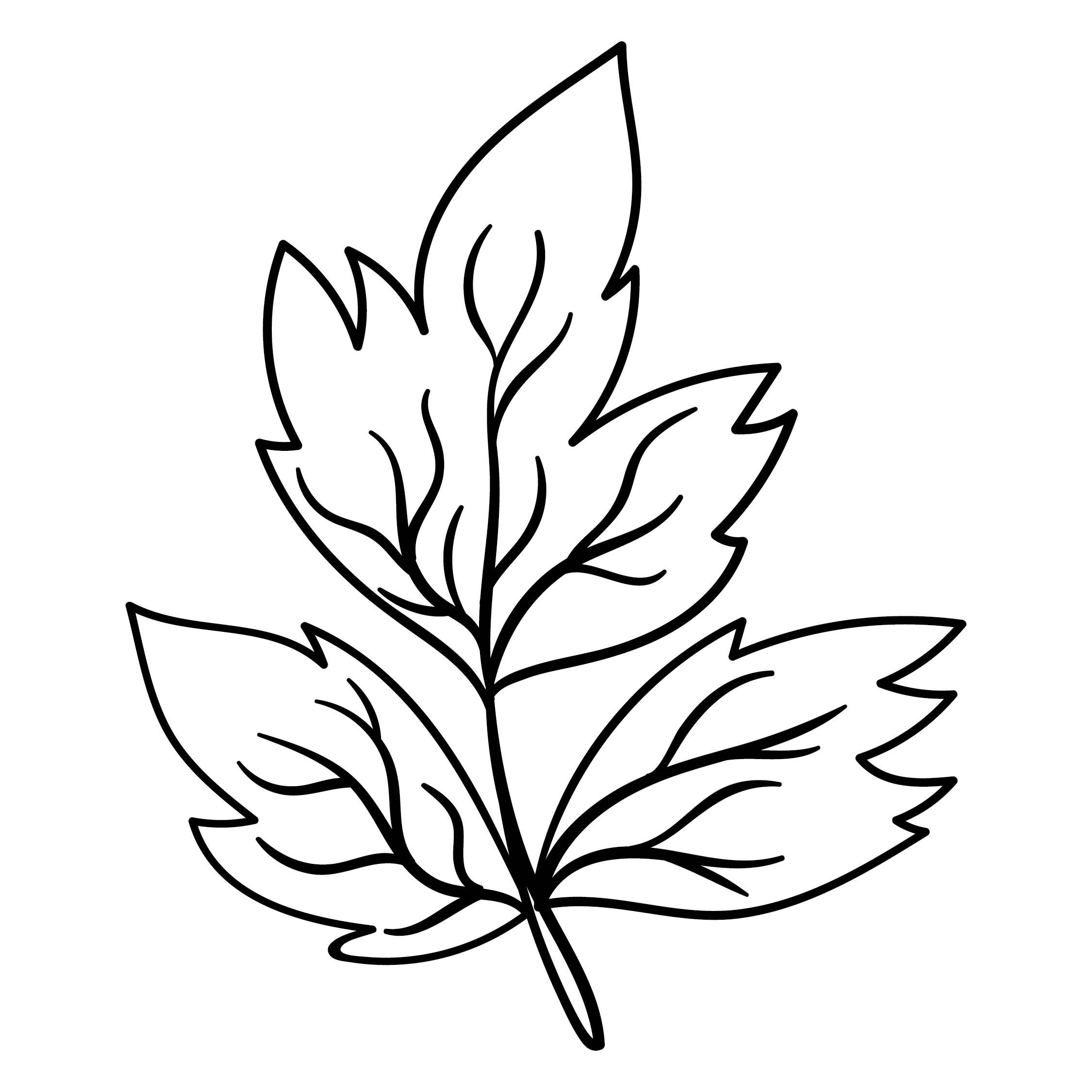 simple leaf outline printable