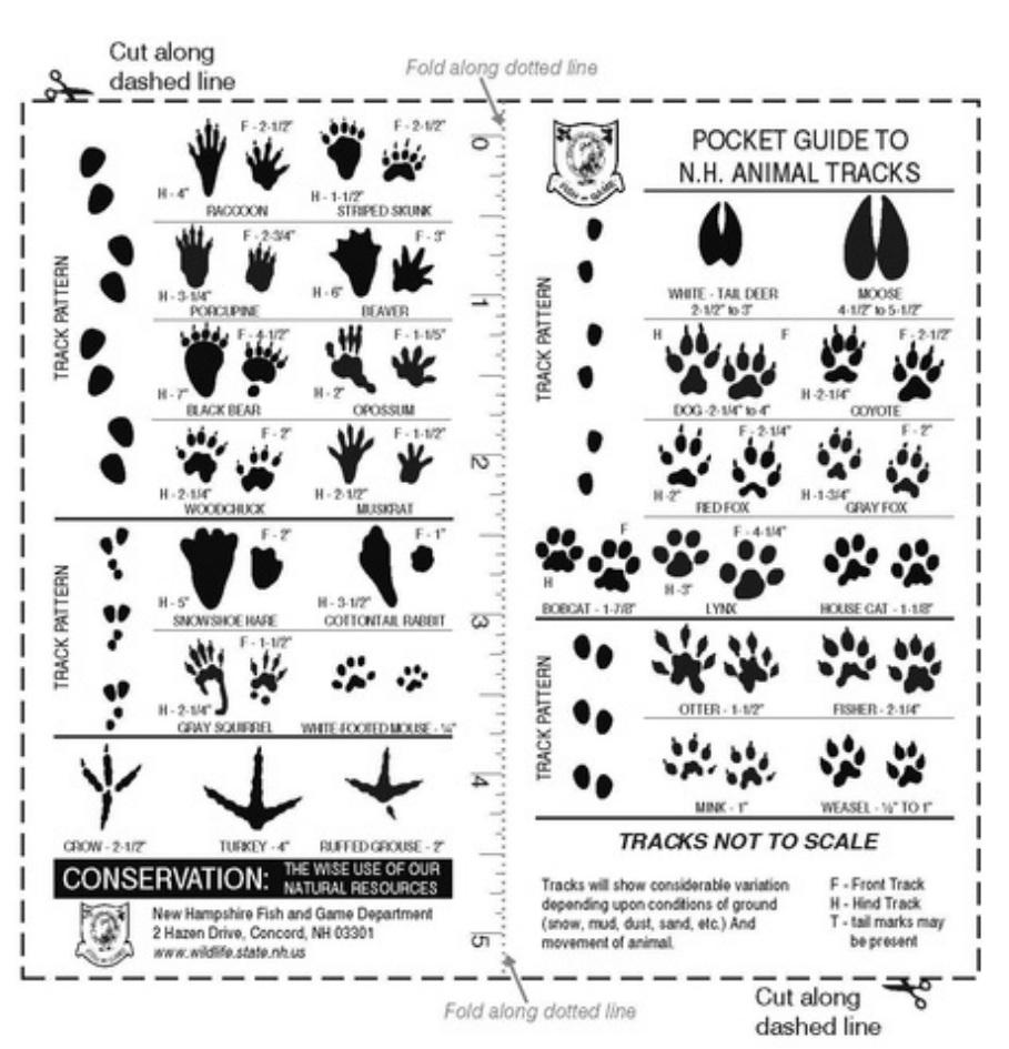 4 Images of Printable Animal Tracks Guide