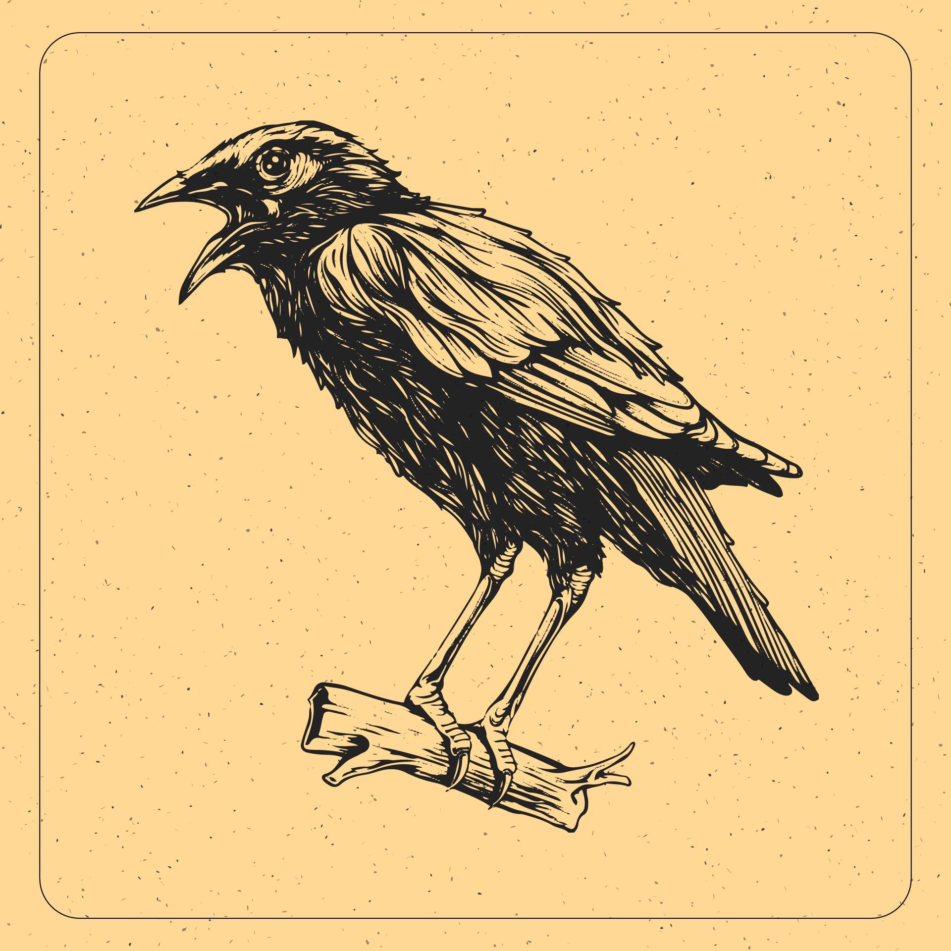 Vintage Crow Clip Art