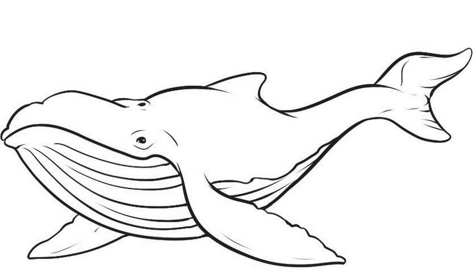 5 Images of Printable Pictures Of Blue Whales