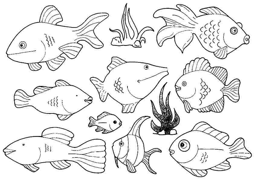 6 Images of Nice Free Printable Fish Coloring Pages