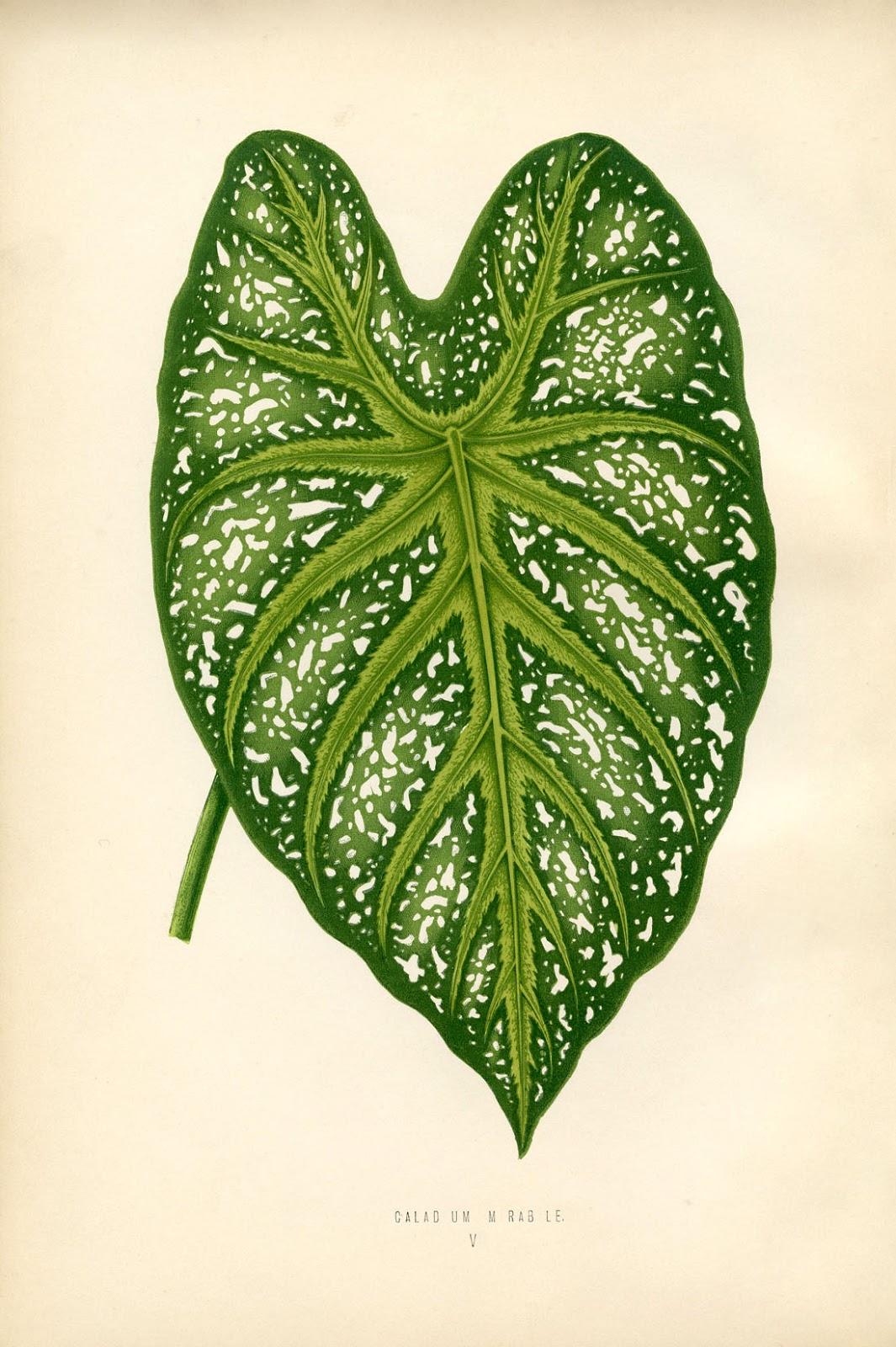 Printable Leaf Wall Art