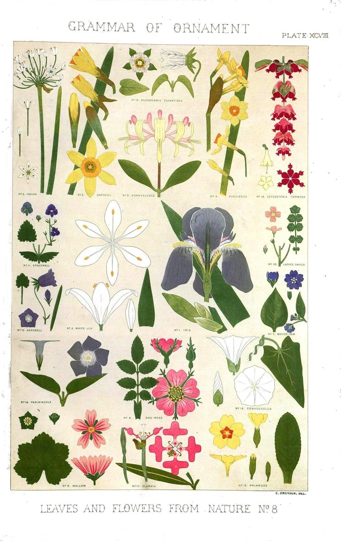 Printable Vintage Botanical Prints