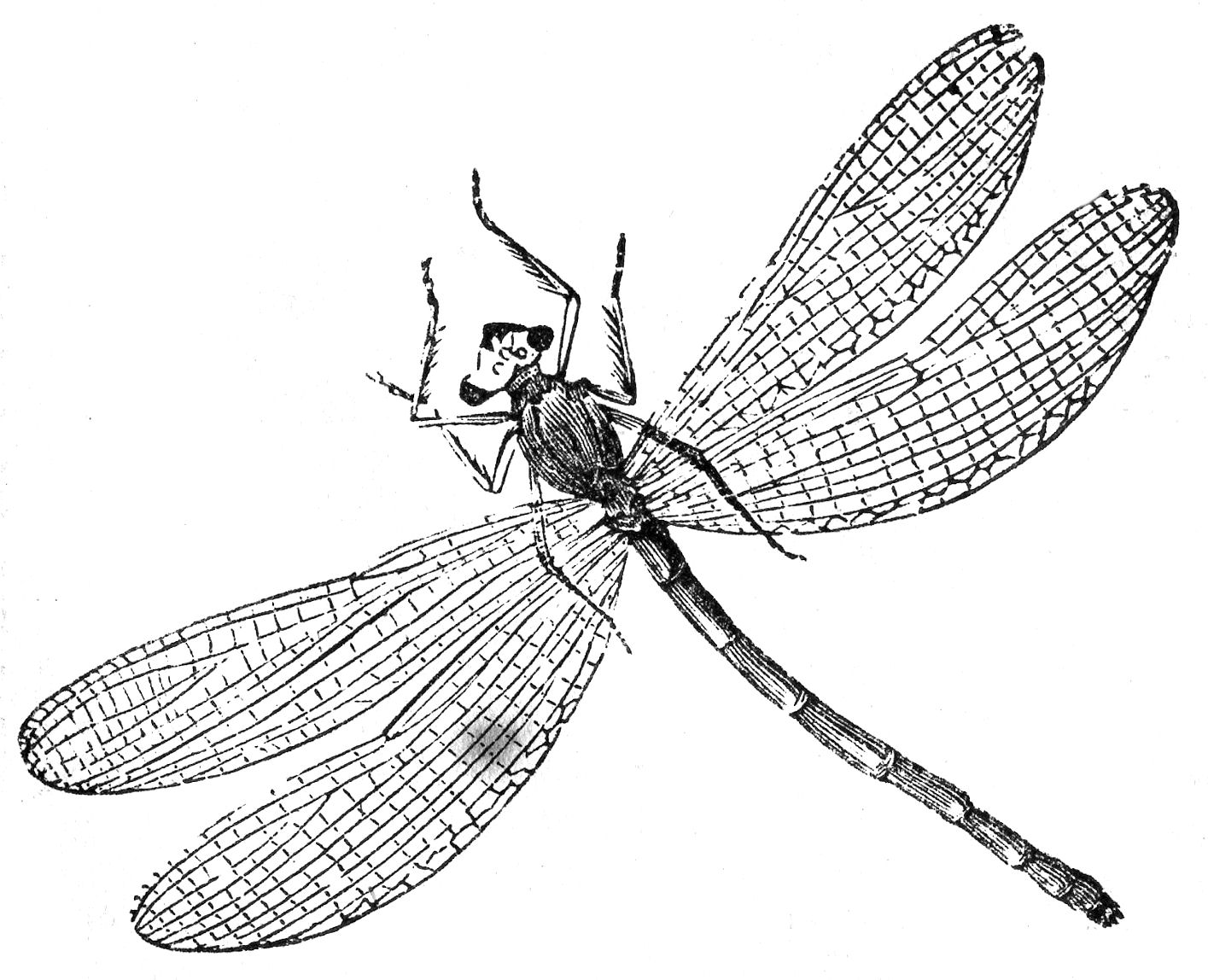 7 Images of Free Printable Dragonfly