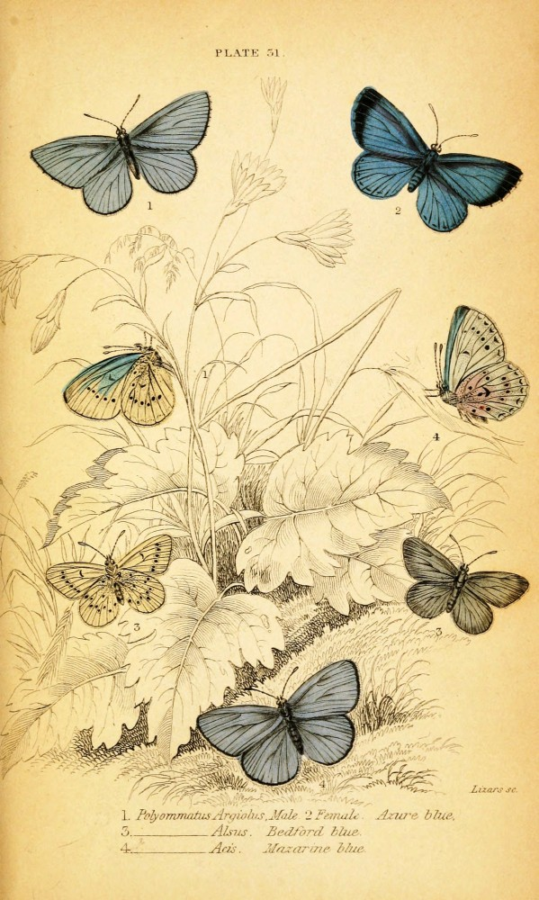 9 Images of Vintage Printable Insect Prints