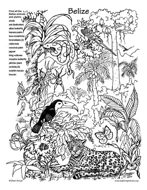 free coloring pages rainforest animals - photo#11