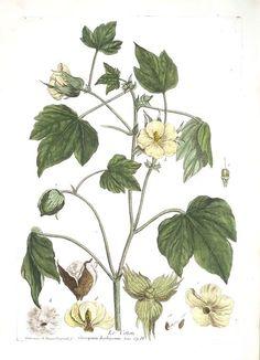 Botanical Prints Cotton