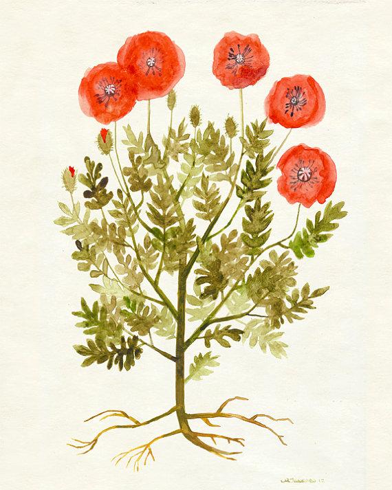 Red Poppy Flower Wall Art