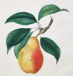 Vintage Fruit Clip Art Borders Flowers