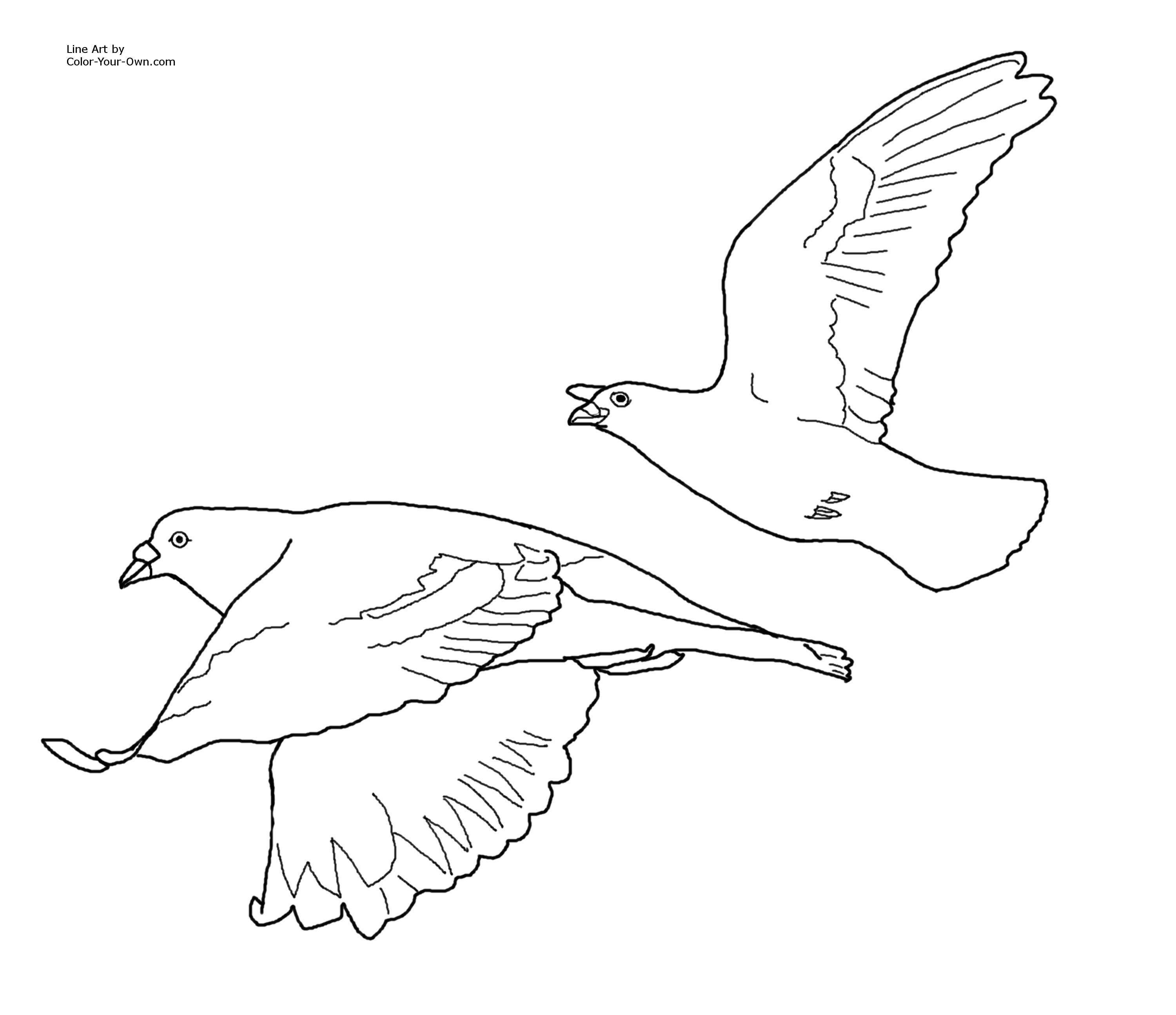Flying Bird Coloring Pages Printable