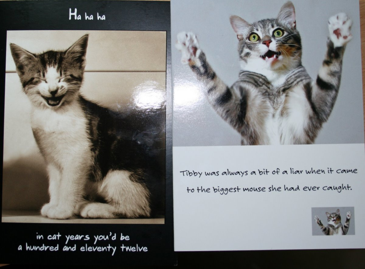 Funny Cat Birthday Sayings