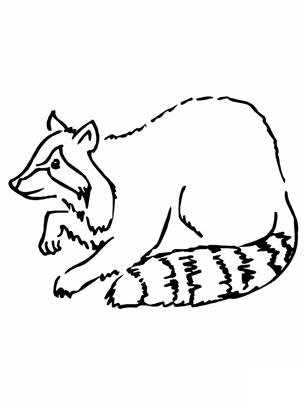 5 Images of Realistic Raccoon Coloring Pages Printable